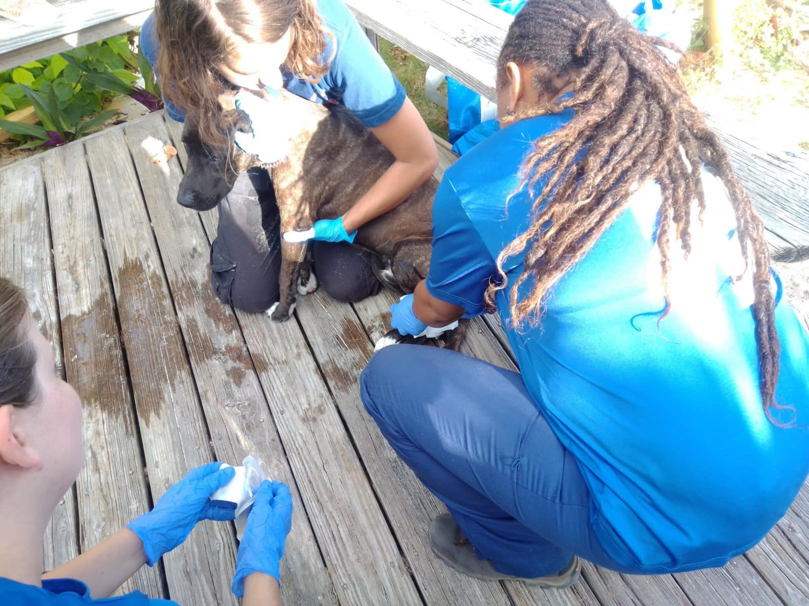 Americares staff assisting a dog with an injured paw in Elbow Cay.